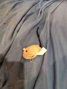 """""""mouse gift"""""""