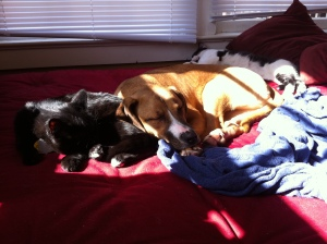 """""""kitten and puppy are friends"""""""