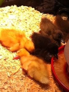 """""""sleepy ducklings"""""""