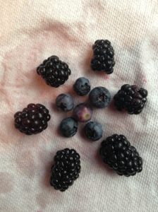 """blackberries and blueberries"""