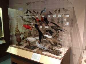 """roger williams museum taxidermy"""