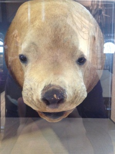 """whaling museum taxidermy"""