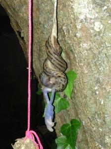 """""""slug sex"""""""