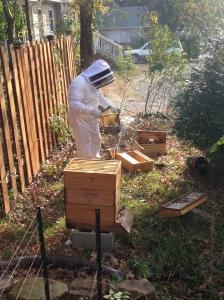 """""""beekeeping"""""""