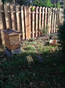 """beehive"""
