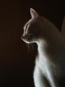 """""""kweku cat"""""""