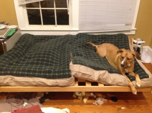 """""""dog bed couch cushion"""""""
