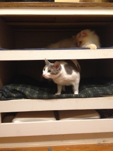 """cat bunk beds"""