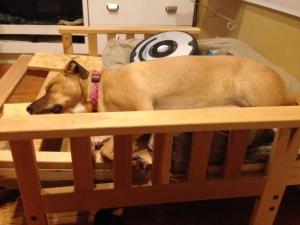 """""""boxhound"""""""